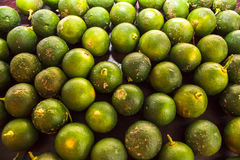 Calamondin Stock Images