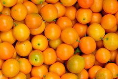 Calamondin orange. Or kumquat in yellow, which is flavor and eat with peel, shown as raw, fresh and beautiful fruit, and beautiful color and shape Royalty Free Stock Photography
