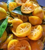 Calamondin oranges after being squeezed Stock Image