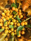Calamondin oranges Royalty Free Stock Photos