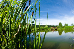 Free Calamus And The Beautifull Water In The Background Stock Images - 20416864