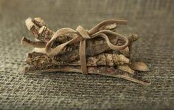 Calamus Root or Sweet Flag Stock Image