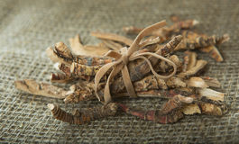 Calamus Root or Sweet Flag Stock Photos