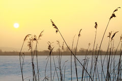 Calamus with sun disc in background. During sunrise royalty free stock photography