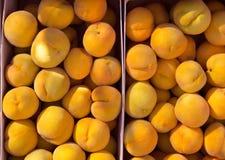Calanda persikor som är rainfed från Teruel Spanien Royaltyfria Bilder