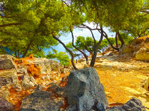 Calanque between Marseille and Cassis, Provence, France Royalty Free Stock Image