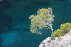 Calanques near Cassis. Tree hanging onto cliff at Calanque d'en Vau, between Marseille and Cassis, Provence, France Stock Photos