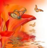 Calas brillantes de los brotes, fondo floral Imagen de archivo libre de regalías