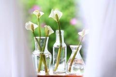 Calas en los floreros de cristal en un alféizar Fotos de archivo libres de regalías