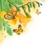 Calas y mariposa brillantes de los brotes Imagenes de archivo