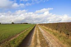 Calcare bridleway con grano e la siepe di arbusti Immagini Stock