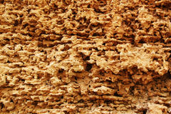 Calcareous sedimentary rock Stock Image