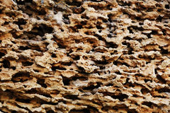 Calcareous sedimentary rock Royalty Free Stock Photography