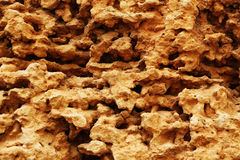 Calcareous sedimentary rock Stock Photography