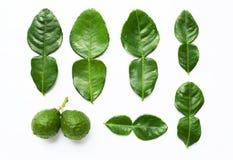 Calce del kaffir del bergamotto con l'erba delle foglie fotografie stock libere da diritti