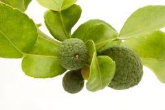 Calce del Kaffir/frutta del bergamotto Immagini Stock Libere da Diritti