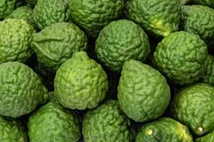 Calce fresche del kaffir, frutta del bergamotto per i prodotti di erbe immagini stock