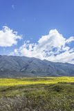 Calchaqui谷在土库曼,阿根廷 库存照片