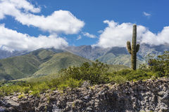 Calchaqui谷在土库曼,阿根廷 免版税图库摄影