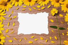 Beautiful festive greeting card. Fresh summer Flowers. Calcined decorative sheet of white paper surrounded by yellow flowers and petals. Creating a creative Stock Photos