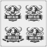 Calcio, baseball, hockey e logos ed etichette del cricket Emblemi del club di sport con il bufalo illustrazione di stock