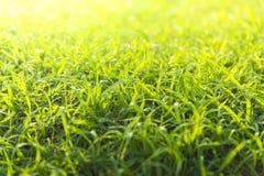 Calcio confuso del cereale di agilità sul campo sul gioco atletico vago di calcio e sulla formazione sul campo vago delle gocce d fotografie stock
