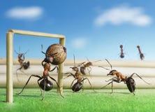 Calcio del gioco delle formiche, micro gioco del calcio Fotografie Stock Libere da Diritti