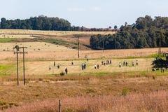 Calcio della scuola che coltiva stile di vita del paesaggio Fotografia Stock