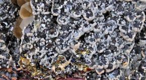 Calcite, galena Fotografia Stock