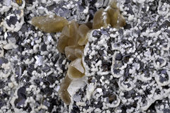 Calcite, galena e blenda, Immagine Stock