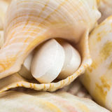 Calcium natural food supplement pills on the seashells background, square image, macro shot, selective focus Stock Images