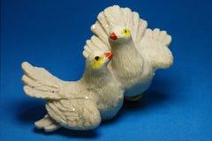 Calcola le colombe fotografia stock libera da diritti
