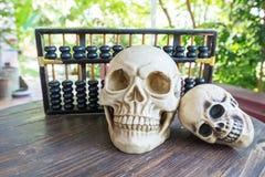 Calcul de crâne Image libre de droits
