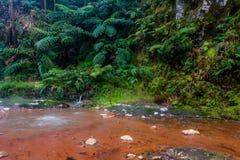 Caldeira Velha瀑布和水池在圣地米格尔-亚速尔群岛海岛, 库存图片