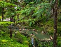Caldeira Velha, naturliga Spa Arkivbilder