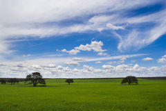 Calden  in fields of the Pampa Stock Photo
