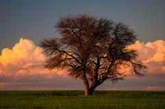 Calden Pampas landscape Royalty Free Stock Image
