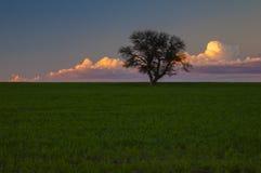 Calden Pampas landscape Royalty Free Stock Photo