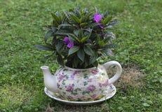 Caldera de los potes del jardín con las flores Fotografía de archivo libre de regalías