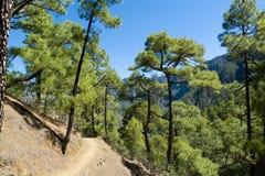 Caldera DE Taburiente, het eiland van La Palma Stock Foto