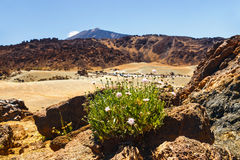 Caldera of a El Teide volcano, Tenerife, Spain Royalty Free Stock Image