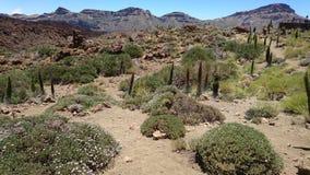 Caldera Teide Tenerife Στοκ φωτογραφία με δικαίωμα ελεύθερης χρήσης