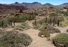 Caldera van Teide Tenerife Stock Afbeeldingen