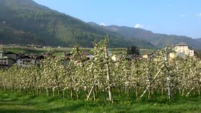 Caldes, Trentino, Italy. Caldes is a comune in Trentino in northern Italy.n stock video footage