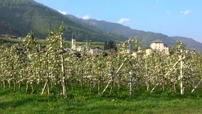 Caldes, Trentino, Italy. Caldes is a comune in Trentino in northern Italy.n stock footage