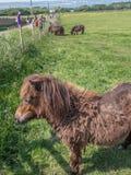 Caldey Island Wales Royalty Free Stock Photography