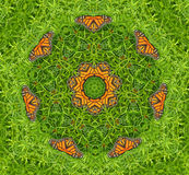 Caleidoscópio do monarca Imagem de Stock Royalty Free