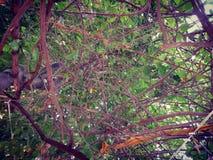Caleidoscoop Royalty-vrije Stock Foto's