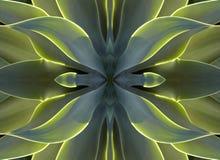 Caleidoscopio 7 - corazón del agavo Fotos de archivo libres de regalías
