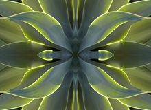 Caleidoscopio 7 - cuore dell'agave Fotografie Stock Libere da Diritti